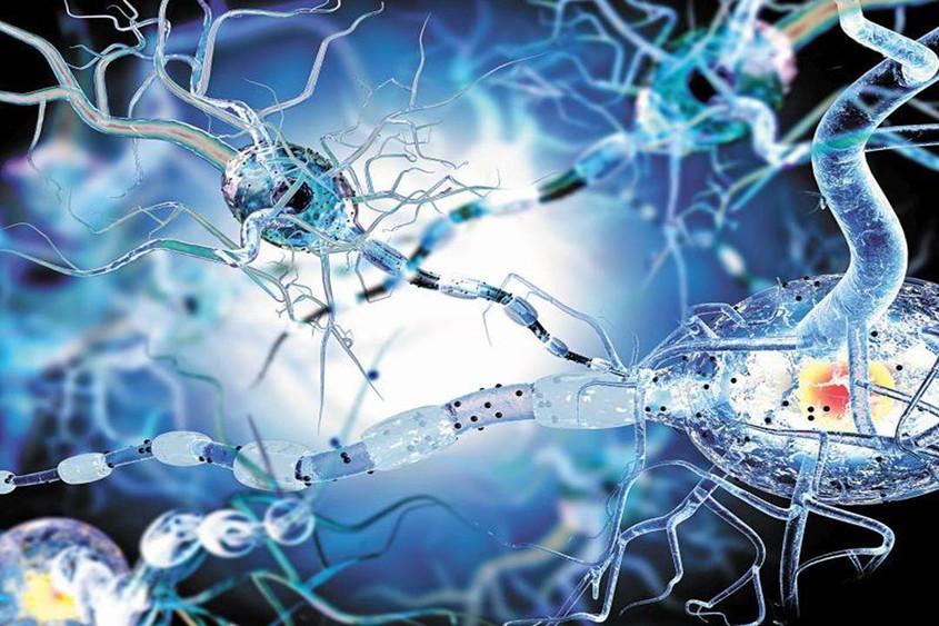 Миелиновые оболочки нервного волокна